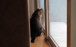 猫を飼っているお家のガラスフィルムの貼り方